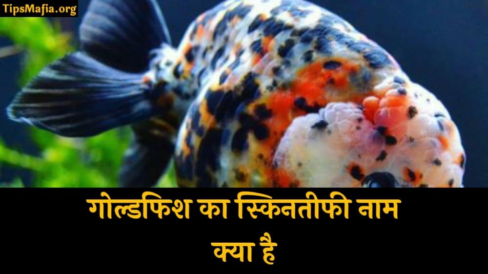 Goldfish का Scientific नाम क्या है | गोल्डफिश साइंटिफिक नाम हिंदी